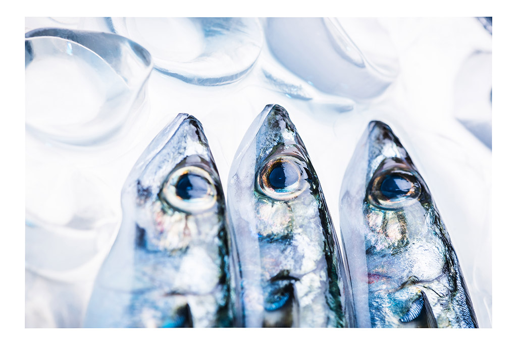 Mackerel 3 by Elena Repetskaya web